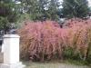 Grădina-parc2